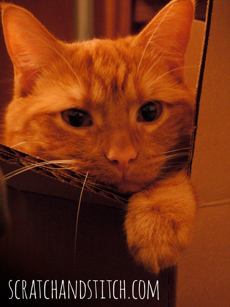 Best Cat Food for Diabetic Cat - scratchandstitch.com
