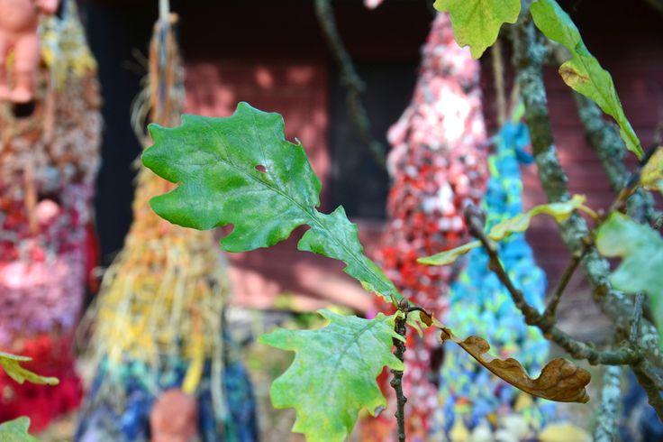 Holes in leaves, in nests, in me..metaphoric peepholes 2015
