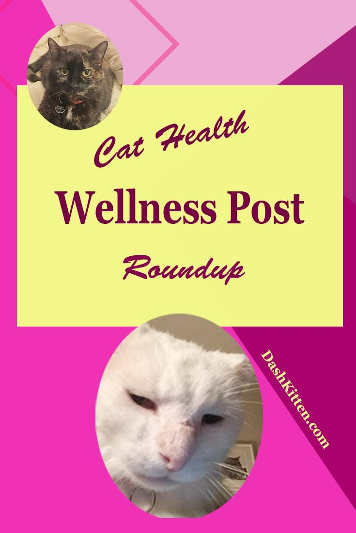 Pet Health Post Review with the Cats at Dash Kitten Blog (scheduled via http://www.tailwindapp.com?utm_source=pinterest&utm_medium=twpin)