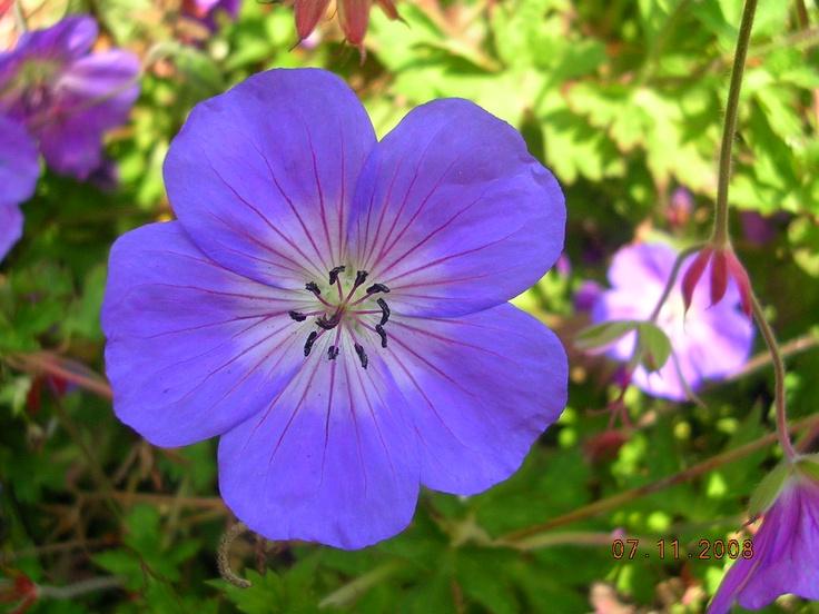 40 Bästa Bilderna Om Official State Flowers På Väst
