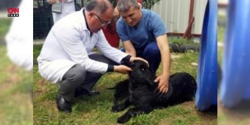 Yalova Belediyesi'ne köpekleri zehirlediği için ceza: Yalova Belediyesi, hayvan barınağındaki köpeklerin zehirlenerek öldürülmesi nedeniyleDoğa Koruma ve Milli Parklar Müdürlüğü tarafından59 bin 148 lirapara cezasına çarptırıldı.