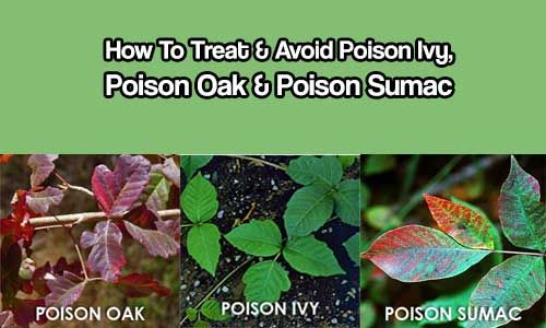 how to know if you have poison ivy