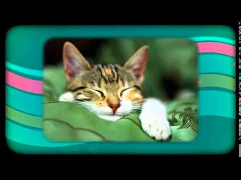 Kittens Meowing: Best Compilation The Most Beautiful and Fun Pets ! ?  https://www.youtube.com/watch?v=yNBk22m1gYY&list=PLC_HjotBFMpOoi_SKE7HoU9skczRCv8aM   YOUTUBE CHANNEL SUBSCRIBE:   http://www.youtube.com/user/TheFederic777?sub_confirmation=1  FACEBOOK:  https://www.facebook.com/KittensLoveForever/  PINTEREST: http://es.pinterest.com/fredalb/  BLOG:  http://look-how-cute-kittens-2.blogspot.com/  BLOG:  http://make-dogs-be-happy.blogspot.com/    #Kittens #Cat #video #Animal #Pet