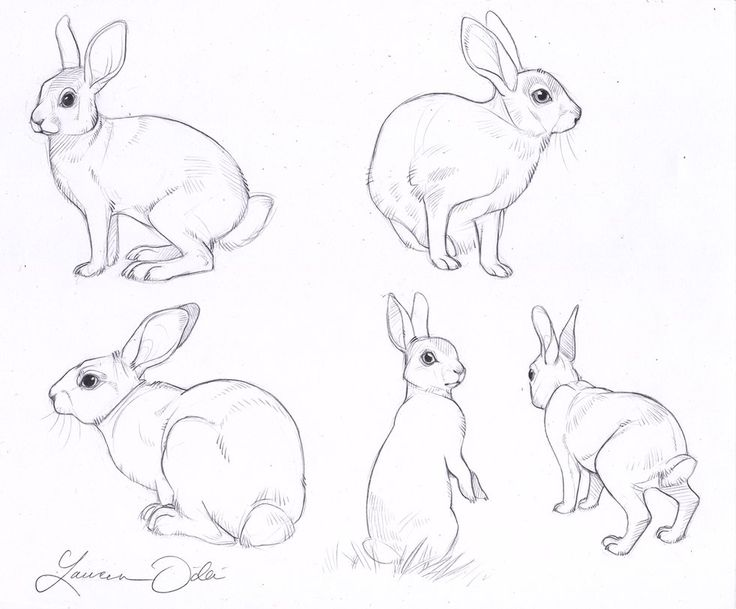 how to draw a small rabbit