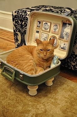 DIY Cat Bed from a Suitcase ~»~ Fairly often older style hard case suitcases can be found at thrift or resale shops & goodwill or salvation army (or similar). Maybe this kitty needs a larger suitcase, seems packing too much for this one... lol : )