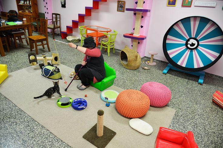 Cat Cuddle Café Red Hill