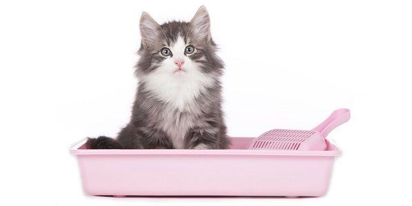 The food doggers: Gatti e lettiera: perchè a volte non la usano?