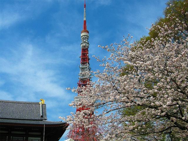 桜と東京タワー (Cherry Blossoms and Tokyo Tower)