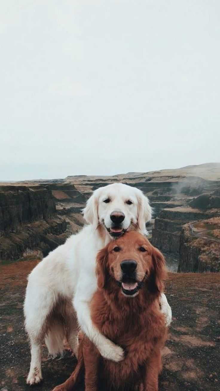 Pin Von Anna M Auf Haustiere 3 In 2020 Tiere Hund Tiere