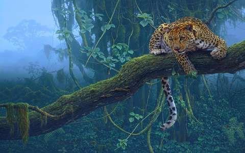 Leopárd a fán, grafika