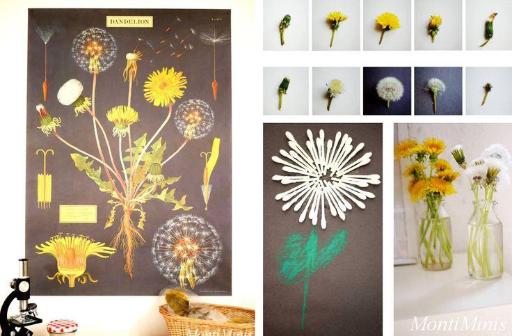 Pflanzen für Entdecker-Kinder | GartenFlora