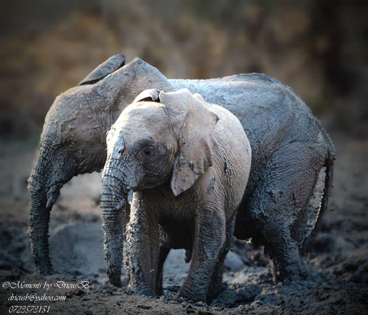 Beauty treatment, Elephant, Kruger Park