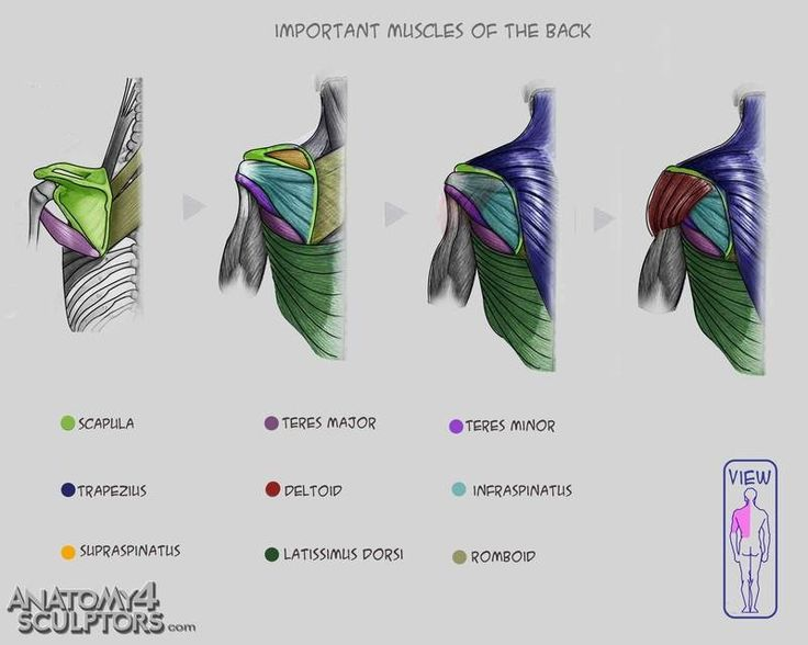 How are muscles named? - Terminology - Human Anatomy ...