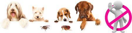 Anti-vlooienmiddel dier: Snij een citroen in vieren en doe dit in een diepe schaal, Giet hier kokend water over en laat het een nacht trekken en klaar is het antivlooien middel. Doe dit in een plantenspuit en besproei uw dier hiermee, pas wel op dat het niet in de ogen komt. Een klein beetje knoflook door zijn eten, door dat dit in zijn bloed komt, vinden vlooien en teken het niet lekker meer en blijven ze weg...