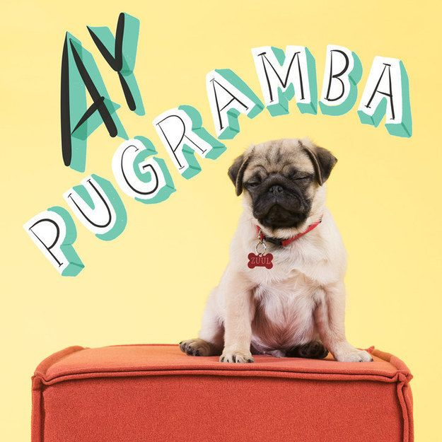 Pug Puns That Will Brighten Your Day   Pug, Puns and Puppys