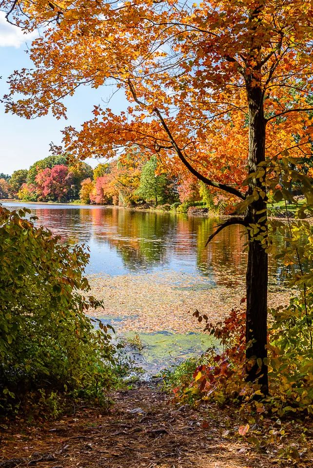 autumn landscape - beautifl fall #tree water river reflection