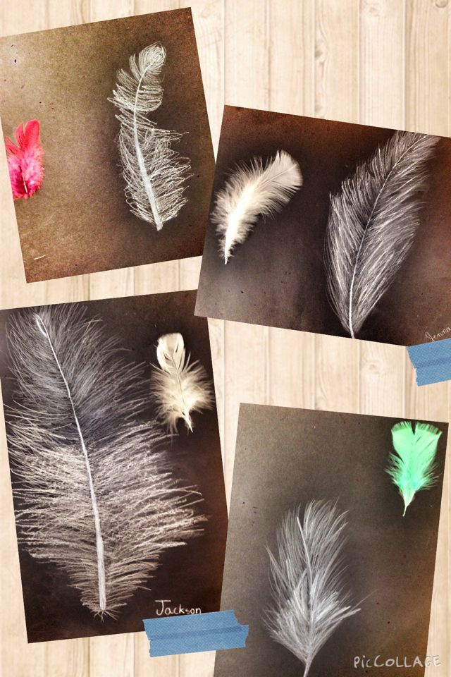 PARK ART SMARTIES: Gr. 4: Feather Studies
