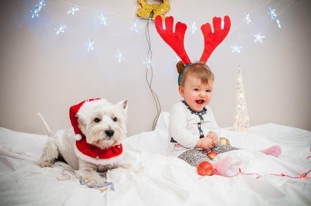 fot. Ewelina Budzińska #swiecsie #photo #christmas #christmaslights #konkurs #foto #dog #kids