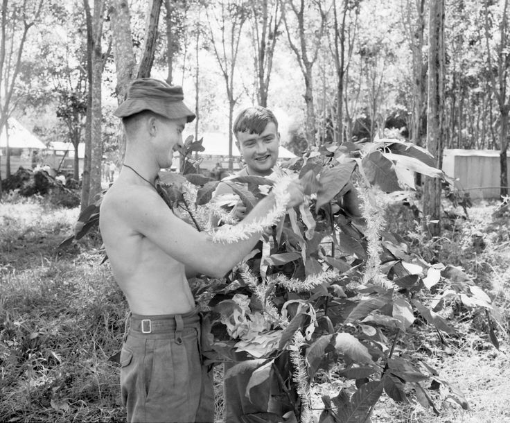 """gunsandposes: """" Christmas in Vietnam: """"Nui Dat, Vietnam. 1967-12. Newly arrived members of 3rd Battalion, The Royal Australian Regiment (3RAR), preparing their base camp for the Christmas season. Private John Barnes of Mullewa, WA (left), and Lance..."""