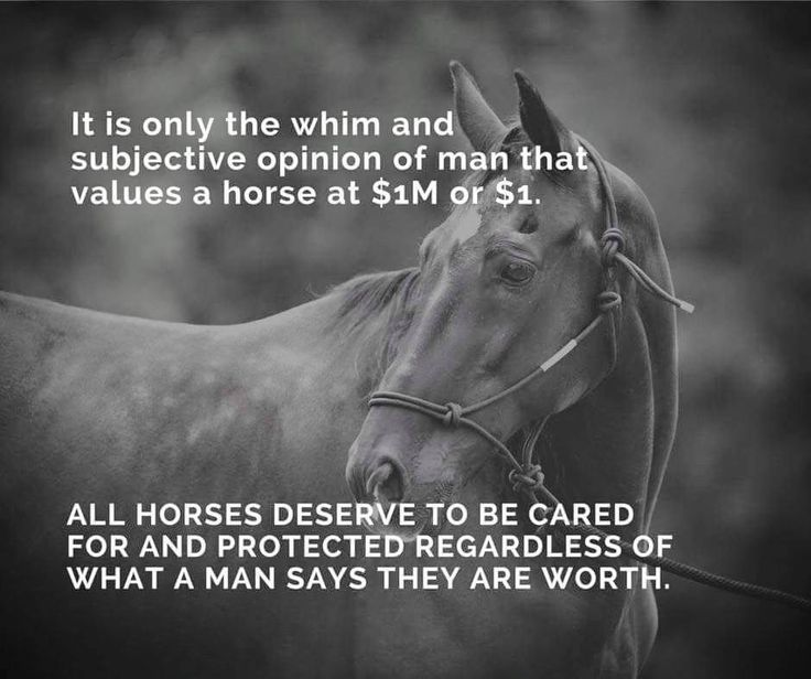Pinterest Animal Quotes: All #horses Deserve To Be Loved