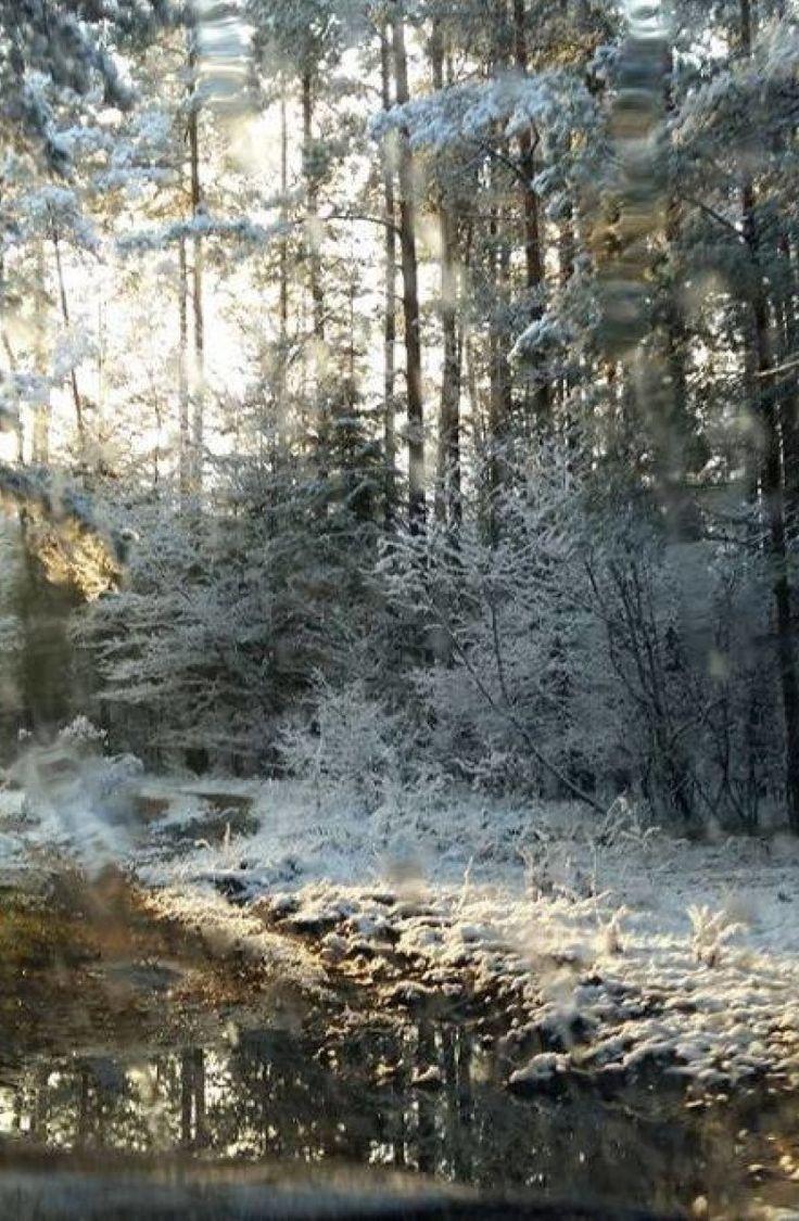 """""""Piękna zima tej jesieni"""". Biały poranek na Waszych zdjęciach - http://kontakt24.tvn24.pl/sg/piekna-zima-tej-jesieni-bialy-poranek-na-waszych-zdjeciach,186535.html"""