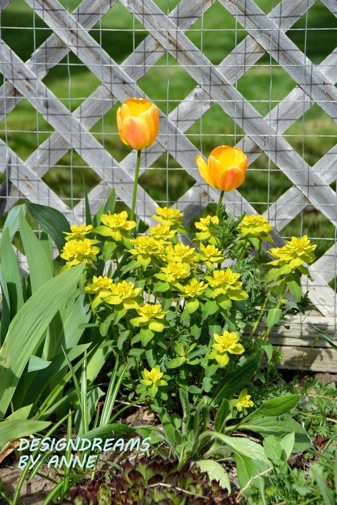 161 best Home Garden Ideas images on Pinterest | Gardening ...