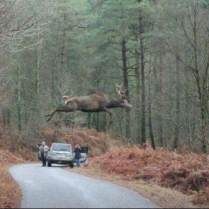 «Elegant photograph, et toujours la même query remark les chasseurs peuvent-i…