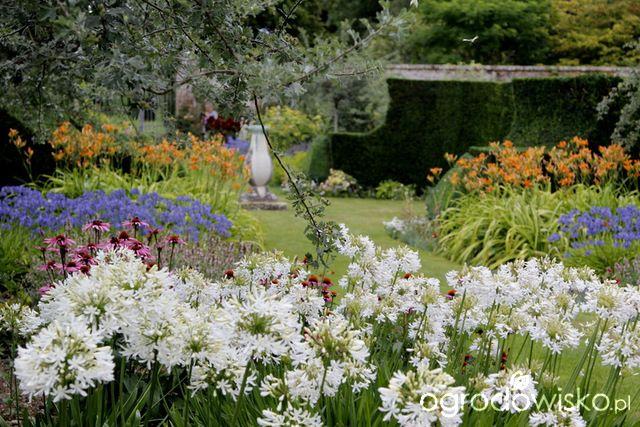 Rabaty angielskie - strona 15 - Forum ogrodnicze - Ogrodowisko