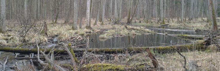 """Wycieczka do rezerwatu """"Koniuszanka II"""" :http://www.tymawa.pl/wycieczka-do-rezerwatu-koniuszanka-ii/"""
