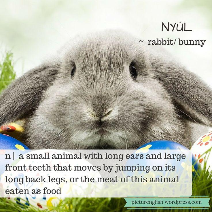 Rabbit / Nyúl
