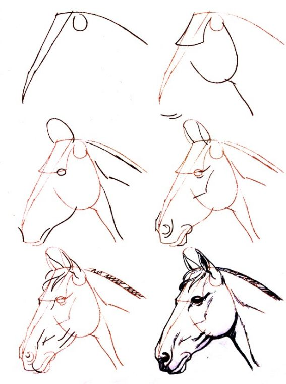 Dessiner un cheval : une tete de cheval                                                                                                                                                                                 Plus
