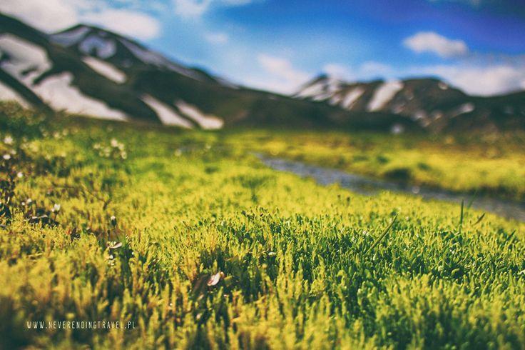 landmannalaugar grass