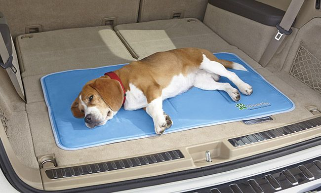 Just found this Gel Cooling Mat %3a Dog Accessories - Gel Cooling Mat -- Orvis on http://Orvis.com!