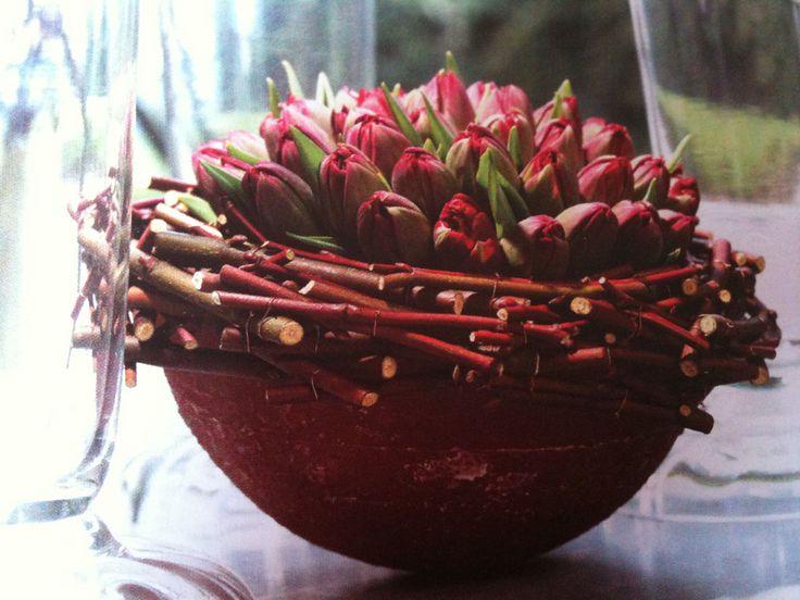 tulipe-rouge.jpg (1024×768)