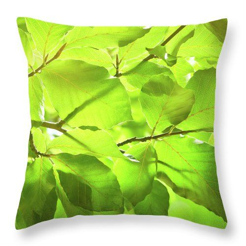 "Spring In The Forest Throw Pillow by Jane Star.  Our throw pillows are made from 100% spun polyester poplin fabric and add a stylish statement to any room.  Pillows are available in sizes from 14"" x 14"" up to 26"" x 26"".  Each pillow is printed on both sides (same image) and includes a concealed zipper and removable insert (if selected) for easy cleaning."