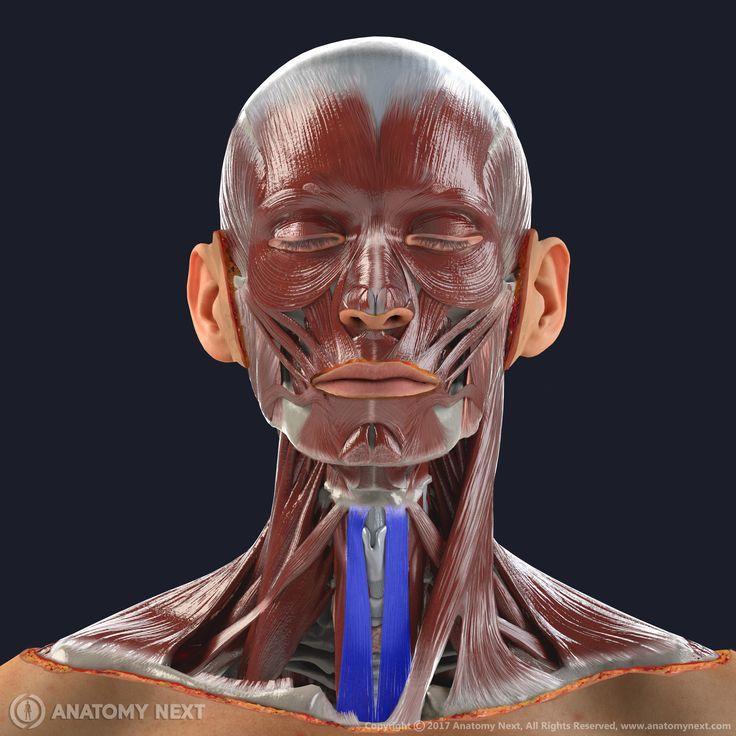 17 besten Anatomy Next Bilder auf Pinterest | Medizin, Anatomie und ...