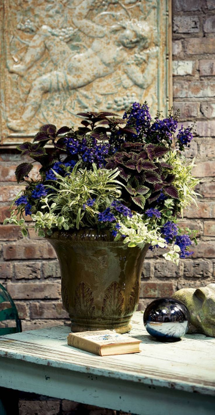 Container Thrillers: 'velvet Lime' Coleus, 'angelface Blue' Angelonia;  Filler