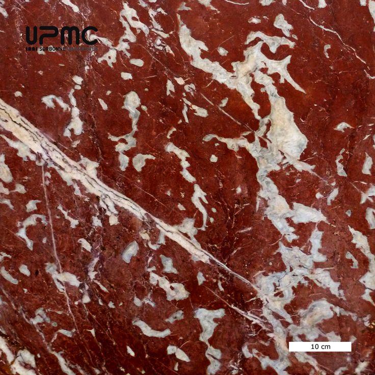 Photothèque des Sciences de la terre Marbre rouge du Languedocou marbre de Caunes