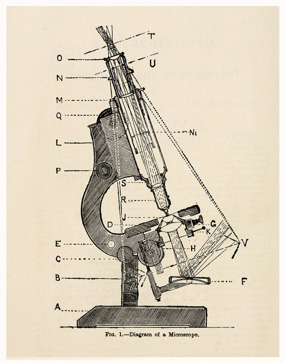 Vintage Science Diagram of Microscope Pull by michaelellisstudios