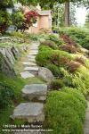 1203254 Stepping stone path through front yard garden w/ Japanese Barberry, Golden Japanese Forest Grass, Bird's Nest Spruce, Ev