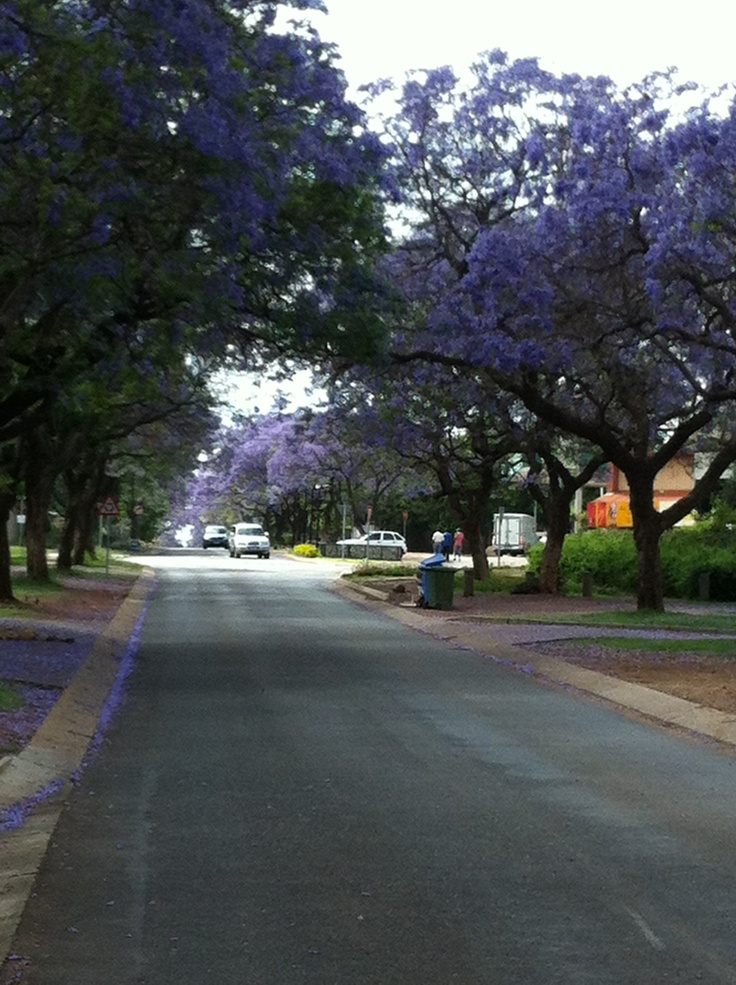 The street I live in. The most beautiful city in the world, Pretoria
