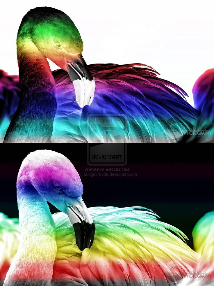 10 Best images about Rainbow animals on Pinterest ...