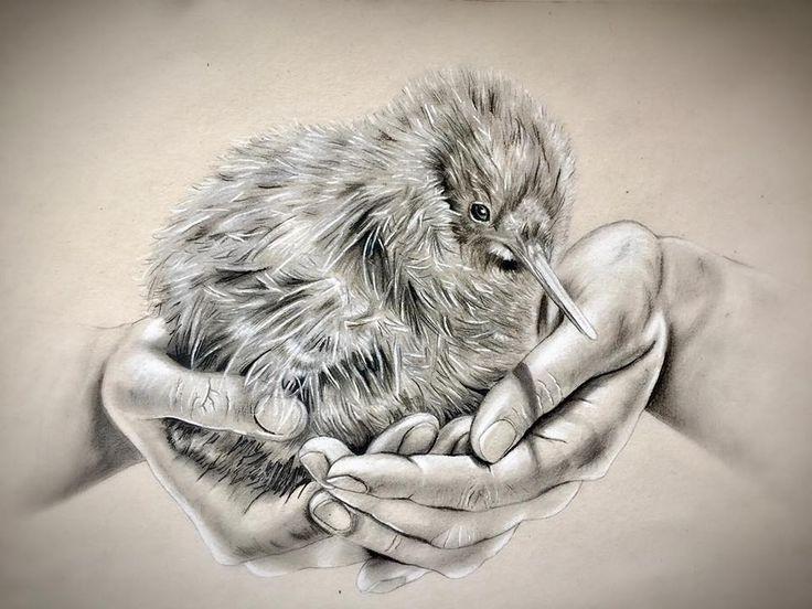 Kiwi Bird, pencil drawing - by Josephine Doege