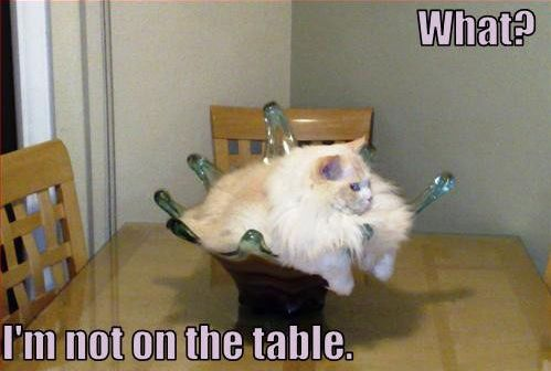HAHA! my next centerpiece idea...Lol Cat, Laugh, Pets, Fat Cat, Funny Stuff, Crazy Cat, Humor, Funny Animal, Kitty