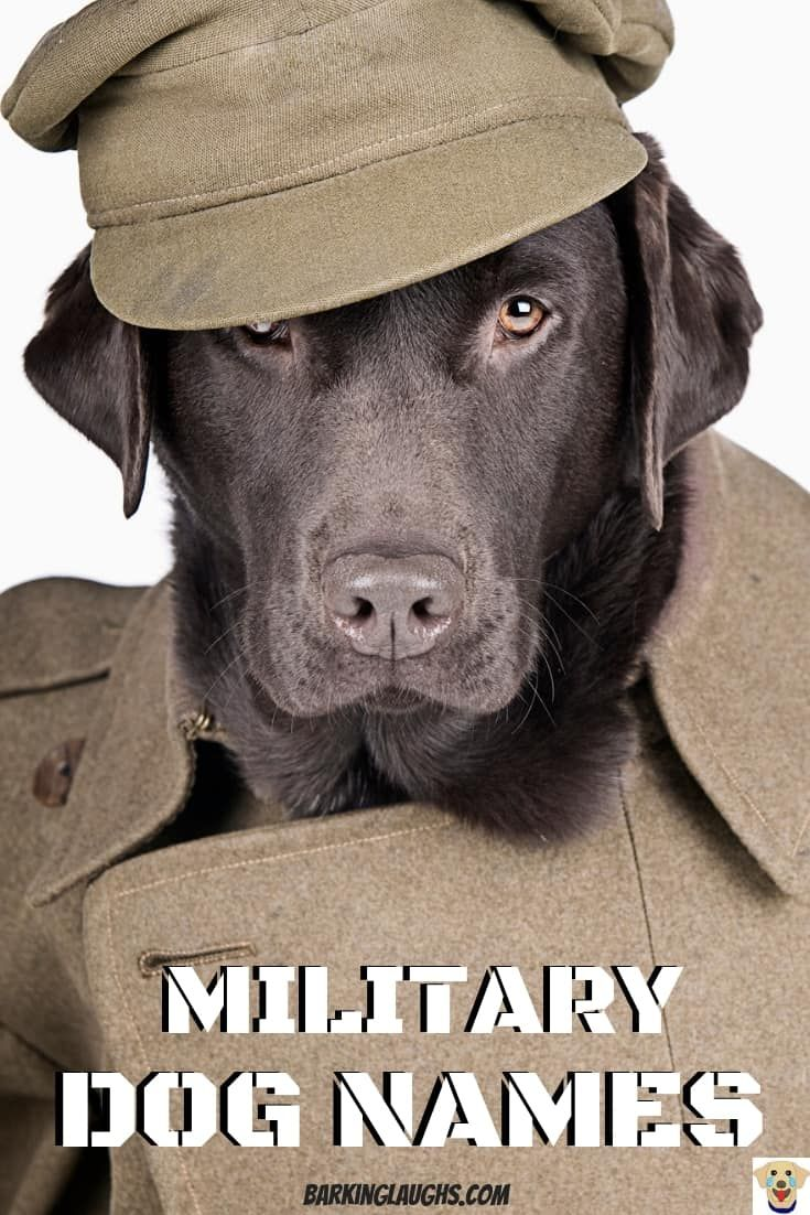 The Best Military Dog Names With Meanings Dog Names Girl Dog Names Most Popular Dog Breeds