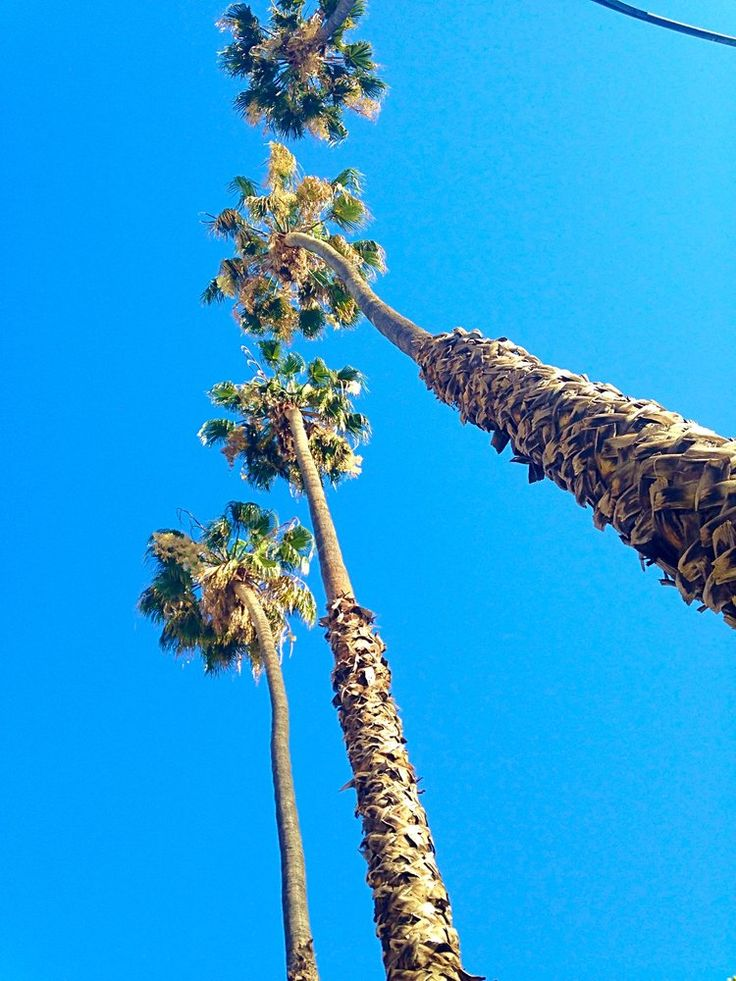 Palm trees in San Jose, California. In this episode, Matt and Marilyn discuss the various weather and climates they've encountered while traveling and living abroad. While sitting in a park in Prague, they talk about weather and climate in Thailand, South Korea, Vietnam, Japan, Taiwan, Prague, and San Jose, California. They drank a bottle of Merlot from Brise de France