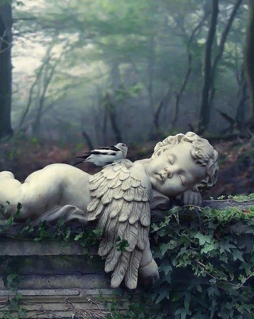 Sweet little bird not a care in the world. Just safely resting on an Angel  ~~♥~~