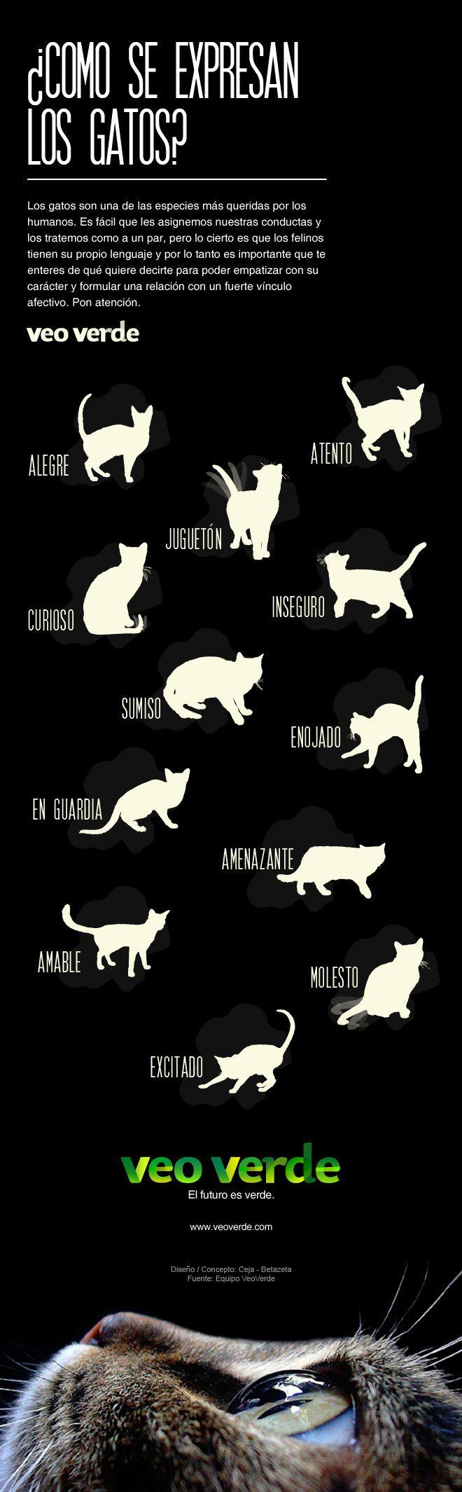 Conoce la expresión corporal de tu felino y aprende a interpretarlo. La comunicación es posible entre especies, solo depende de tu empatía.