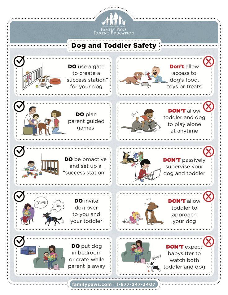 Dog - Toddler Safety