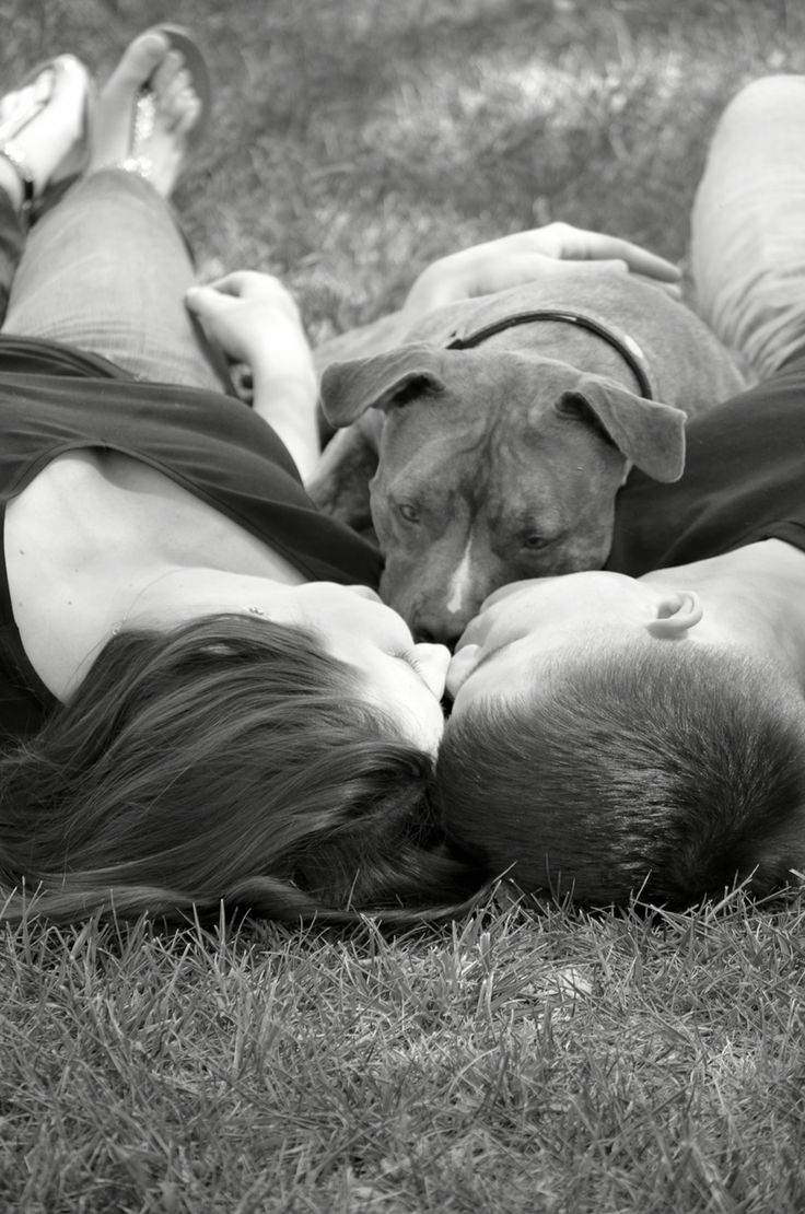 Engagement photos with pitbull